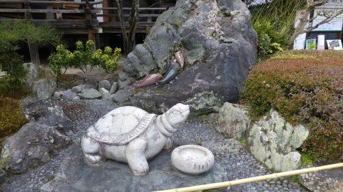 53-1亀と鯉